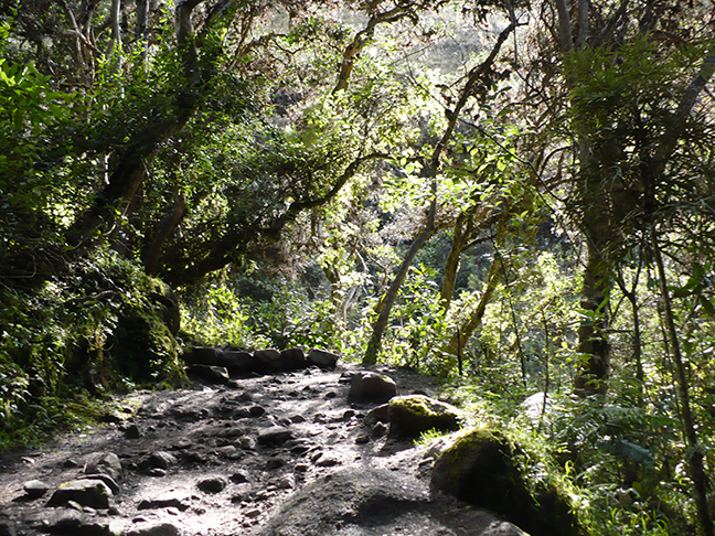 inca-trail-path