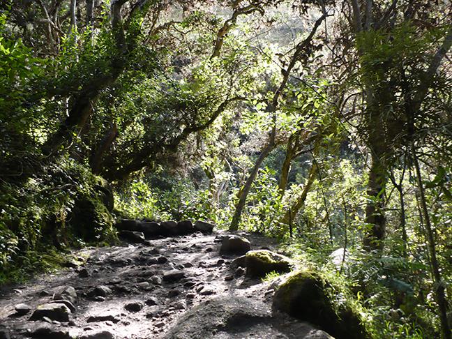 inca-trail-path